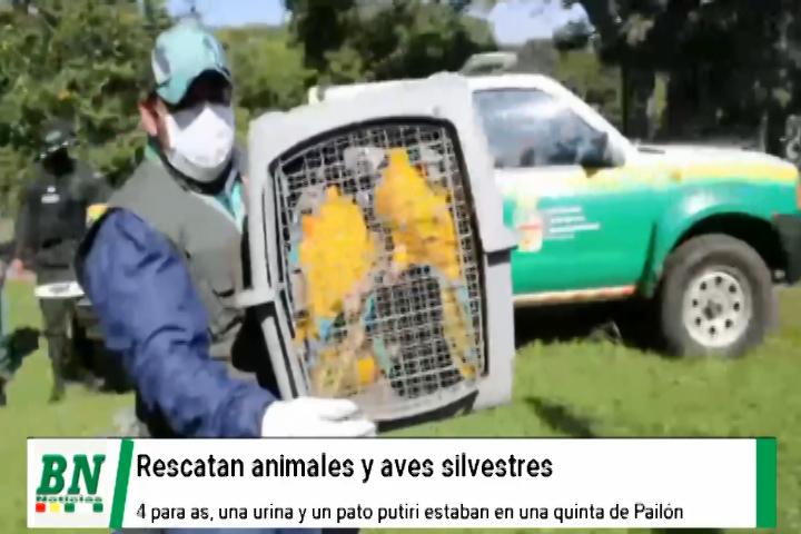 Rescatan animales y aves silvestres que estaban en una quinta por Pailón