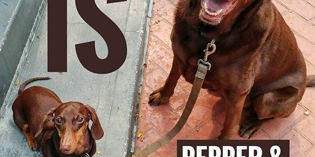 From Barks and Recs Instagram…Happiness is in Pepper and Calla at the daycare today