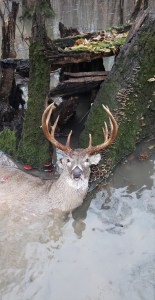 CLAY COUNTY BRUISER