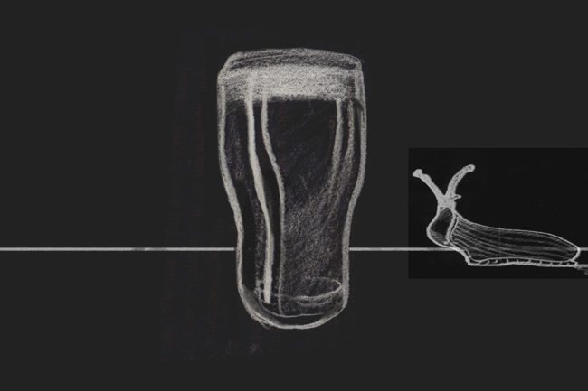 A slug approaching a pint of beer.