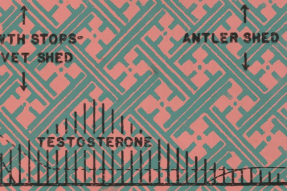 Illustration: Testosterone.