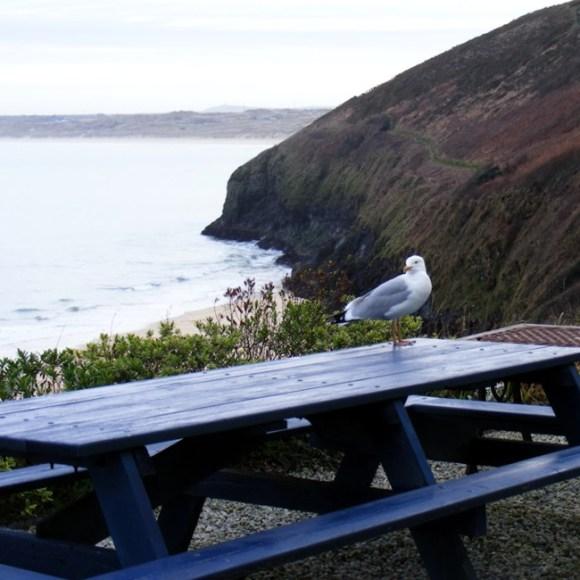 A seagull on a pub table.