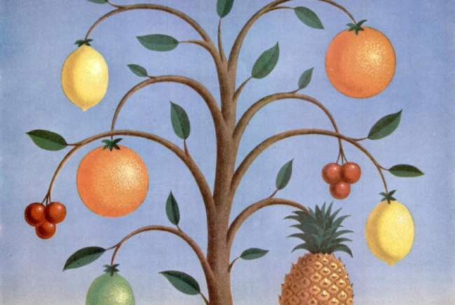 Detail from a 1943 advert for Lifesavers depicting fruit on a tree.