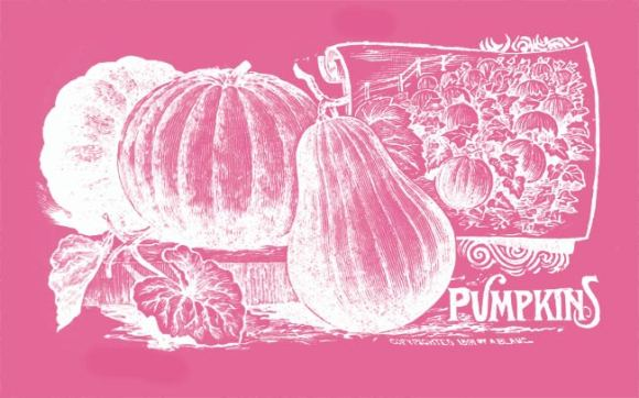 Vintage illustration of pumpkins.