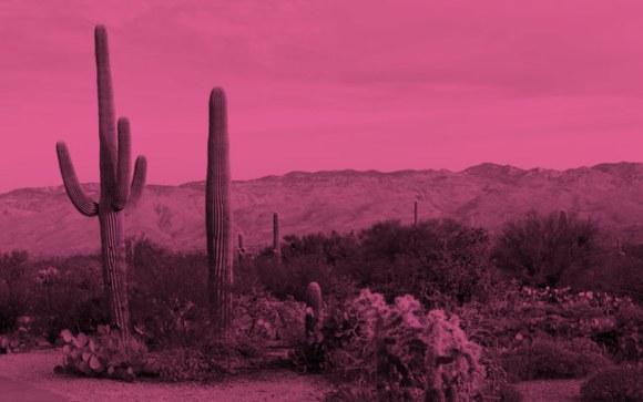 Cactus in a desert.
