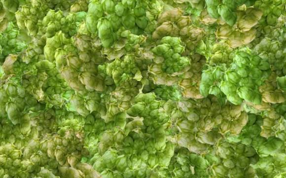 A random scattering of hops.