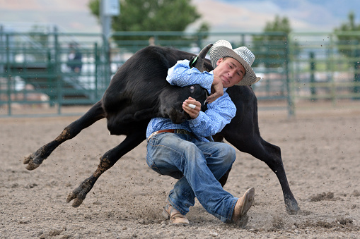 Young cowboy wrestling a steer in a rodeo.