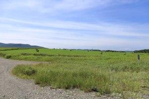 コムケ湖 牧草ロール