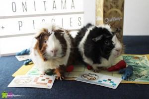 Onitama guinea pig custom made cards