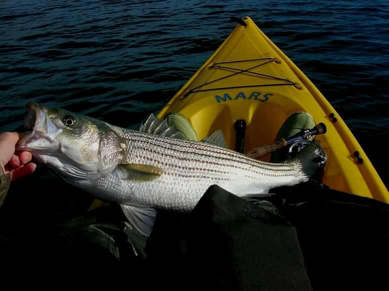 Style Of Fishing Kayak