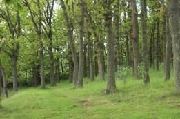 aeroeskoebing denmark trees