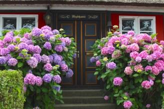 troense svendborgsund flowers house water sky sun houses