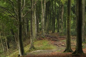 forest path green bay genner fjord denmark trees tranquil