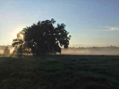 misty-morning-pasture-tree