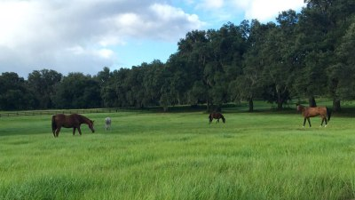 pasture-long-grass-four-horses
