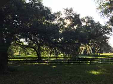 trees-fence-pasture-shady