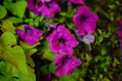 St. Charles - Potted plant flowers © Bobbi Rose Photography