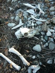 Misc Bones