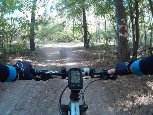 Trening w lesie? to żaden problem