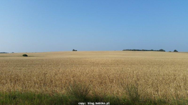 Zboża - przepiękna złota kraina wokolicy Jastrowia