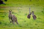 Australia - Leie bobil i Australia
