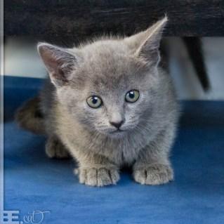 pisici_mici_03
