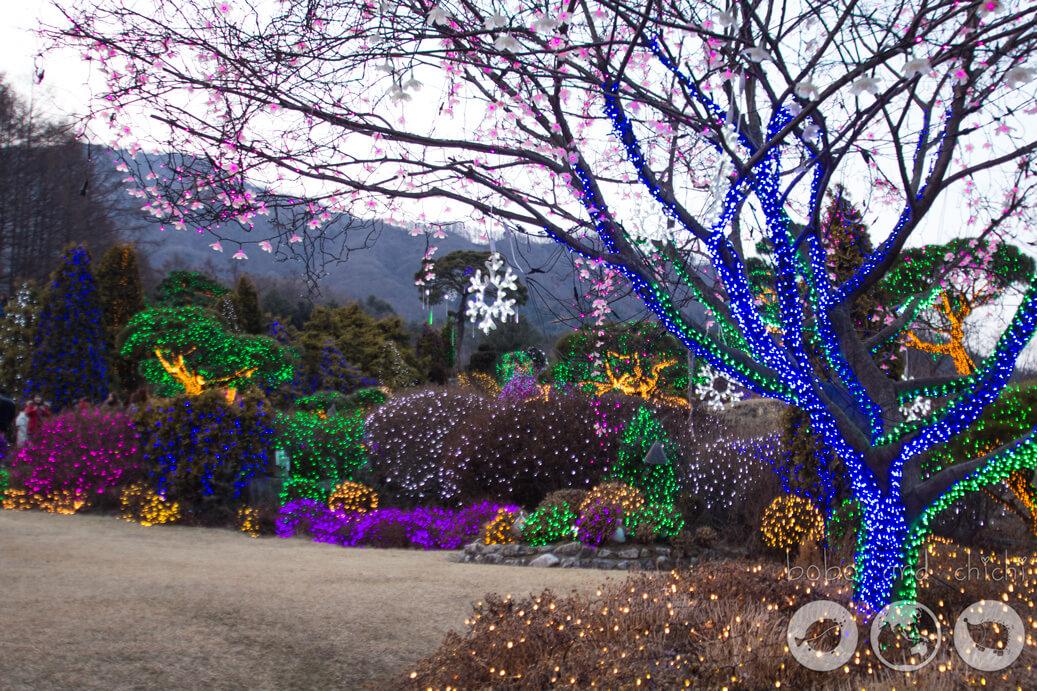 Lighting Festival Seoul Cheongpyeong Lighting Festival Seoul Tree