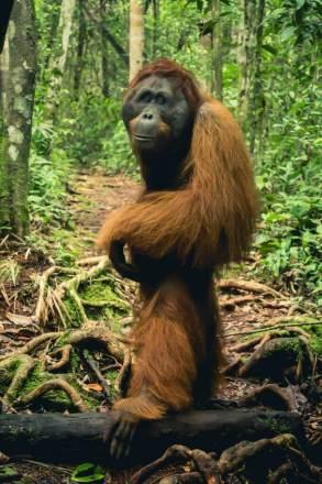 Borneo_-140