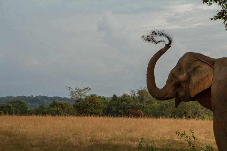 Elephant-Playing-in-Dirt