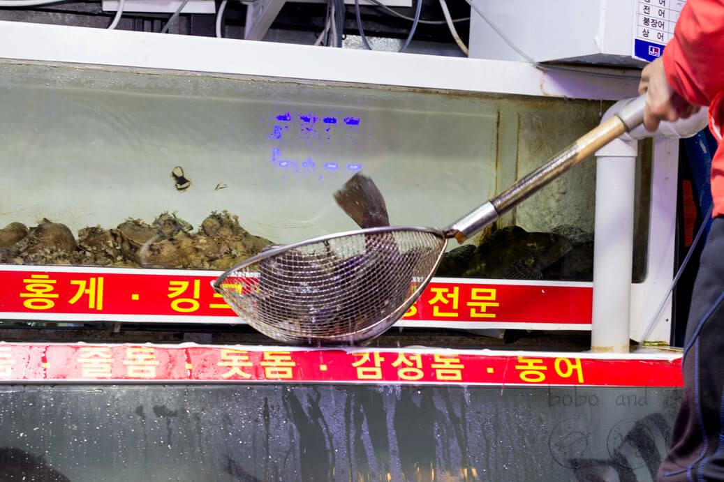 Sokcho's Fish Market
