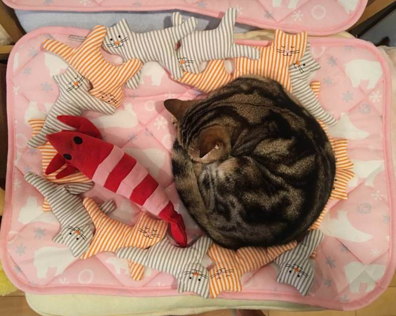 kitty-bed-at-japan-cat-cafe