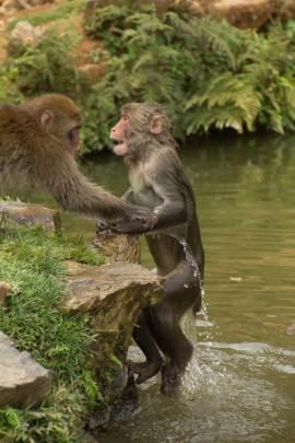 Monkey Hill21