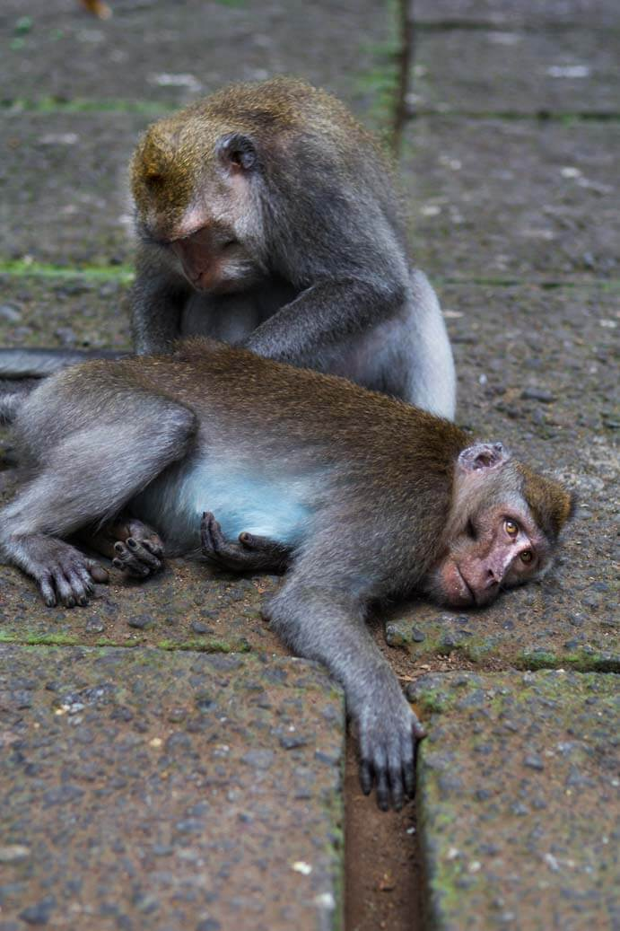 Sacred Monkey Forest in Ubud
