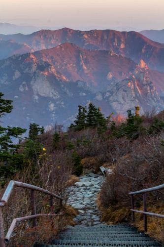 Peak---Vert-Purple-Ridge