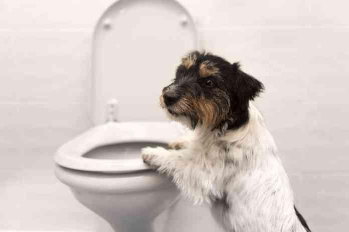 Dog Bathroom