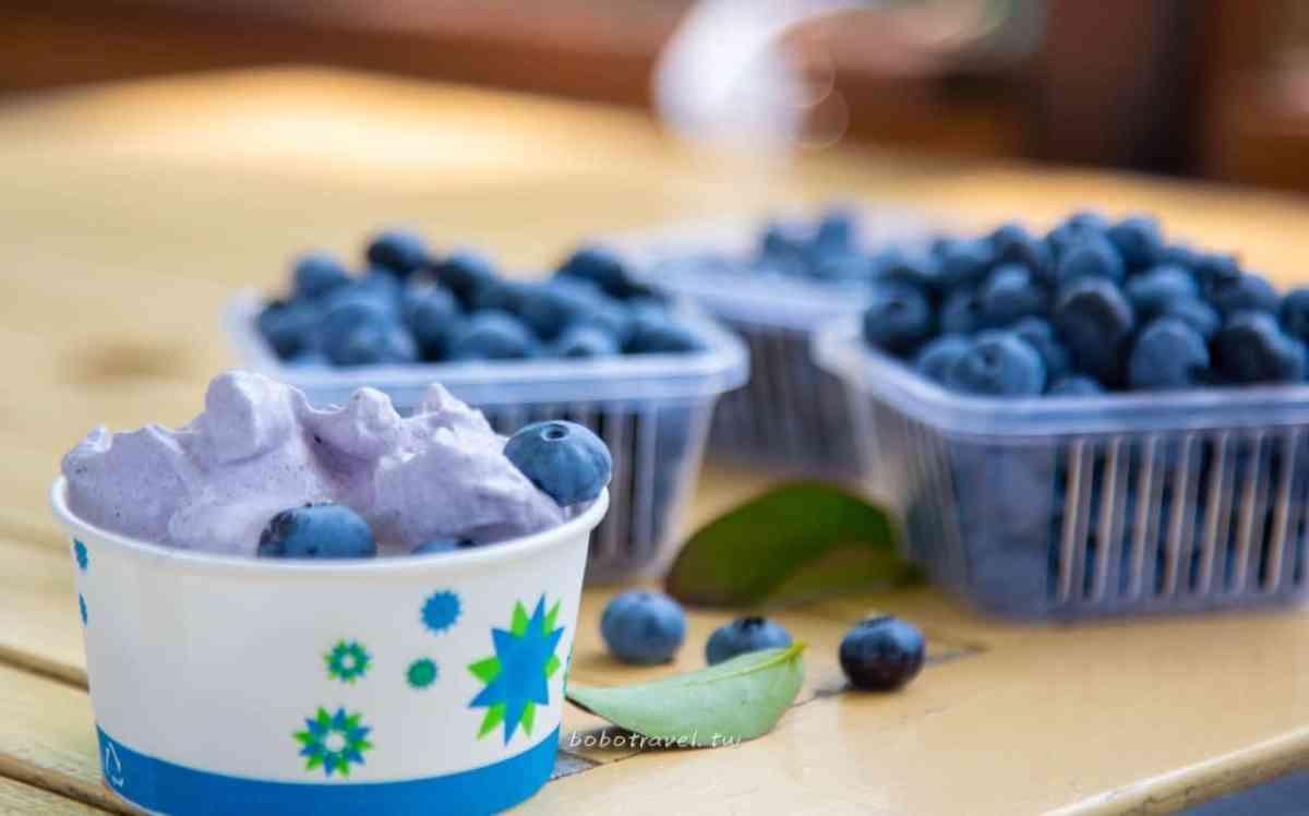釜山採藍莓24