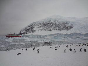 antarctica-penguins-icebergs