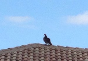Angry birds Boca