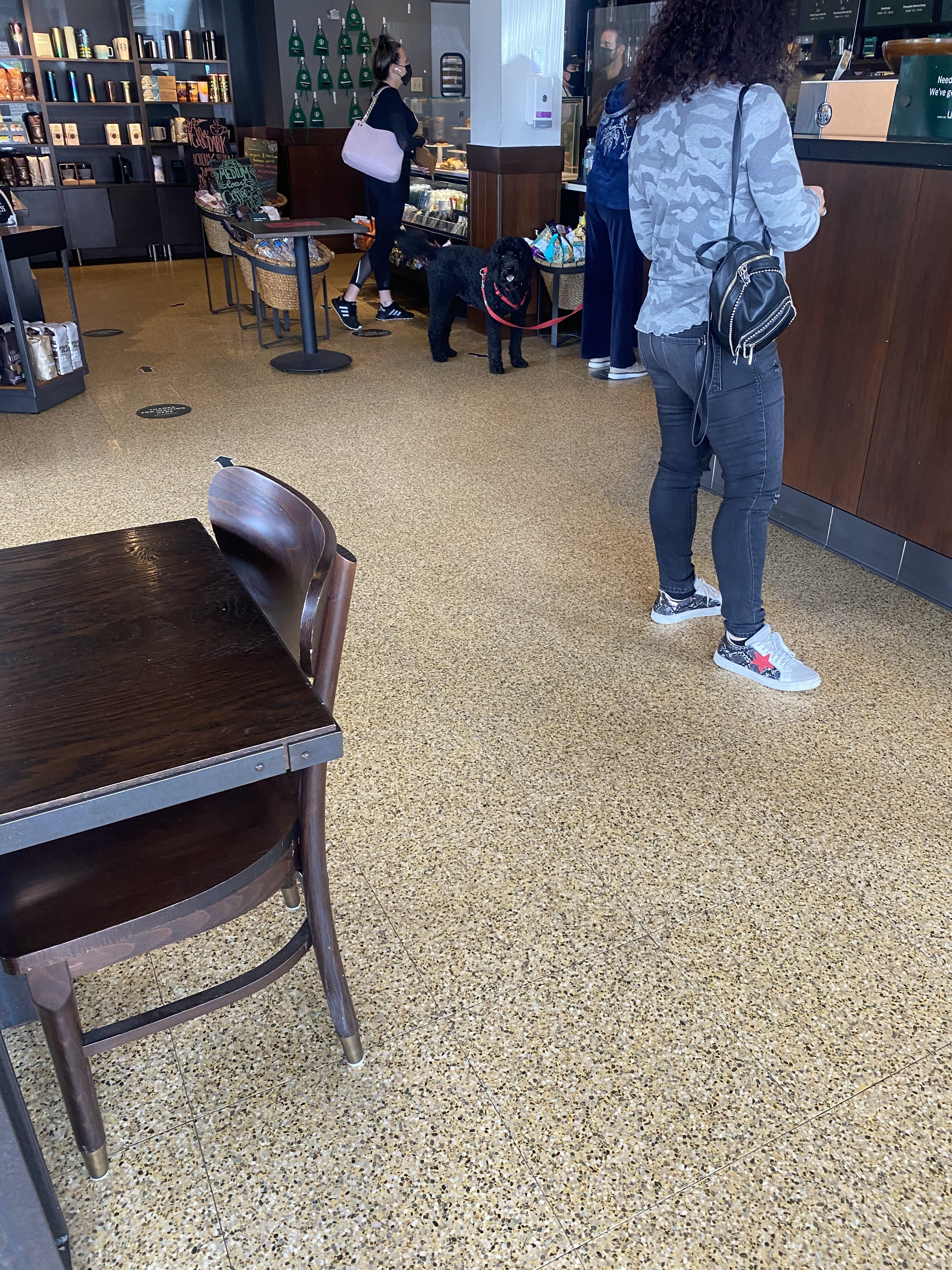 dog Starbucks west boca