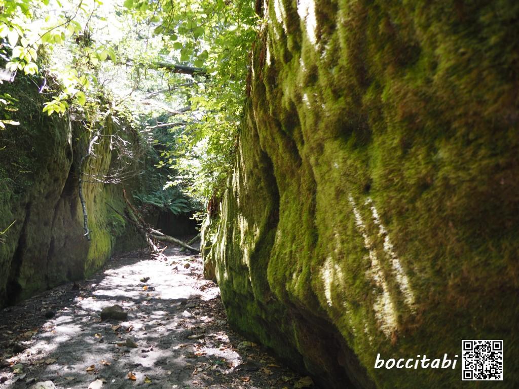 楓沢 苔の回廊