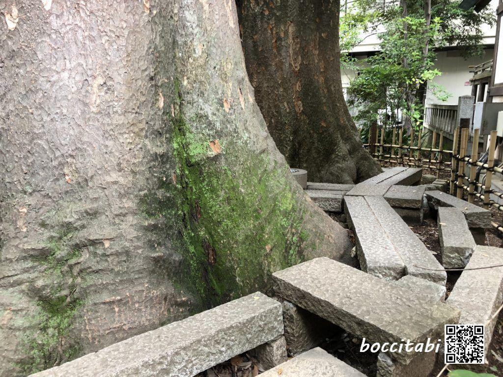川越氷川神社ご神木