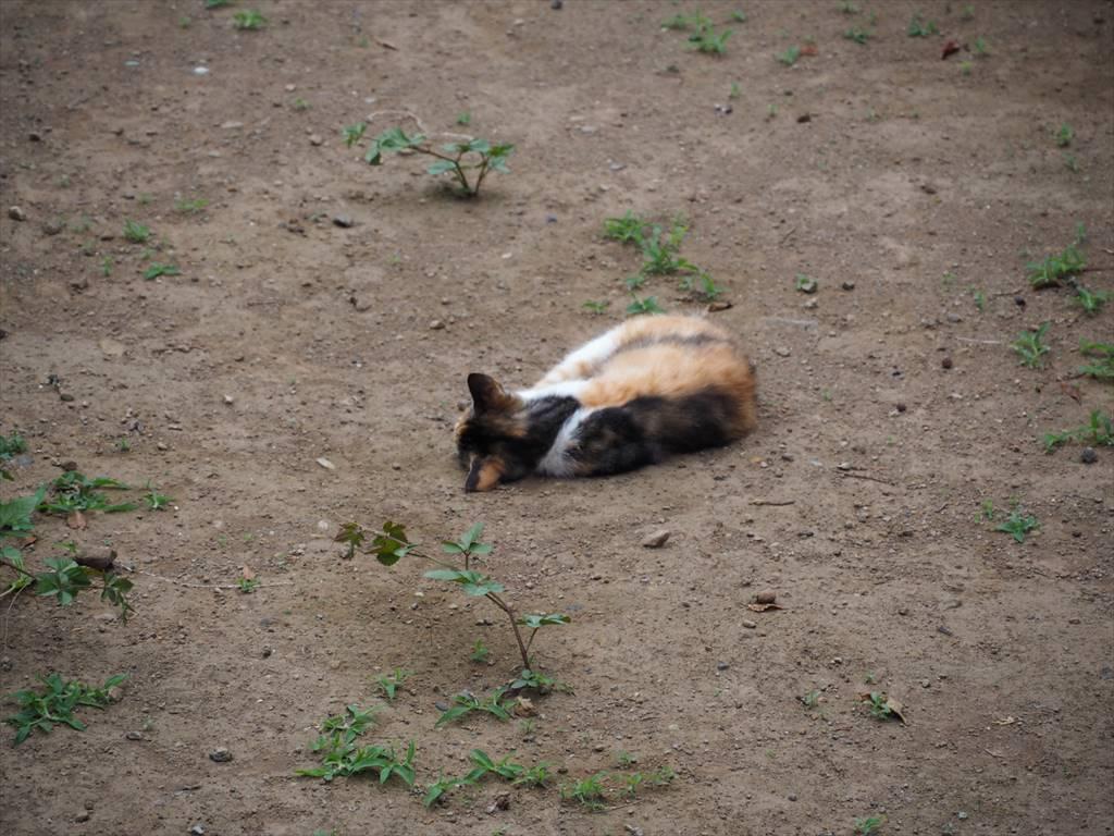伊豆山の猫