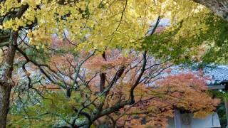 鎌倉安国論寺の紅葉