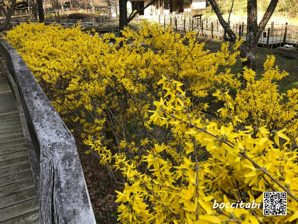 鎌倉中央公園の花