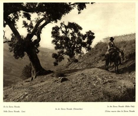 en la Sierra Nevada