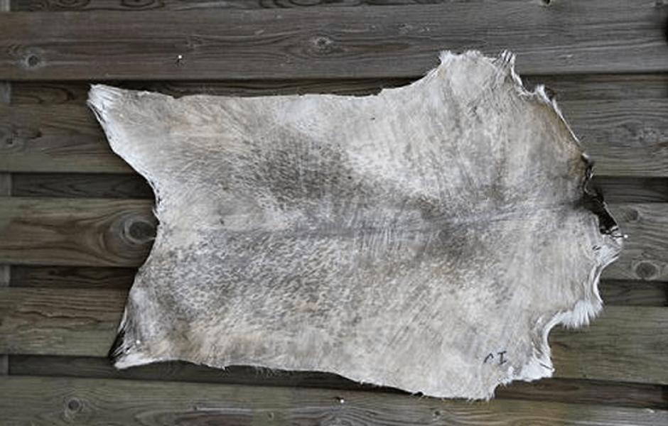 ivory brendan white bodhran