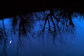 reflections7
