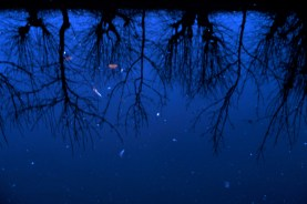 reflections8