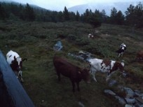Nattlig besøk på hytta