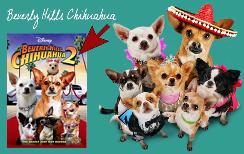 Beverly-Hills-Chihuahua-Film-Papi-Cortez-Dog-Theme-Party